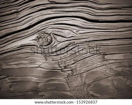 Macro of wooden texture