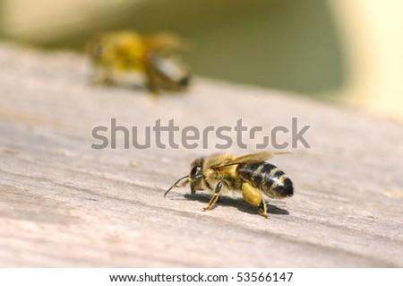 Macro of working bee near beehive