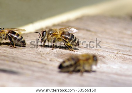 Macro of working bees near beehive