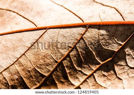 Macro on Autumn Foliage ( HDR image )