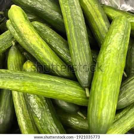 Macro photo cucumbers. Stock photo fresh green cucumber background