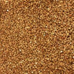 Macro Photo food buckwheat groats. Texture background grain buckwheat groats. Image food product porridge buckwheat grains