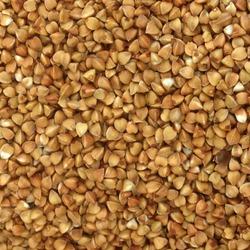 Macro Photo food buckwheat groats. Texture background grain buckwheat groats. Image food product porridge buckwheat