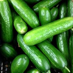 Macro Photo food cucumbers. Texture pattern background green cucumbers. Image fresh green cucumbers