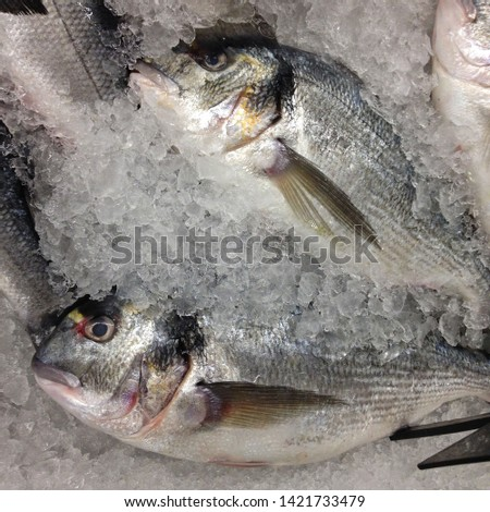 Macro Photo food fresh-frozen Gilt-head bream fish. Texture background sea fish dorade. Image of seafood fresh fish Gilt-head bream orata lying on ice