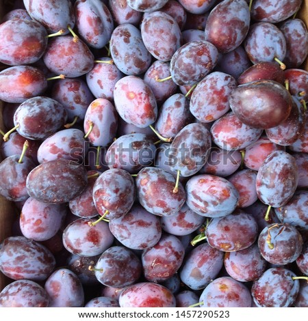 Macro Photo food fruit plums. Texture background of fresh blue plums. Image  fruit product blue plums