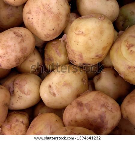 Macro photo food root vegetable potatoes. Texture vegetable white young potato.