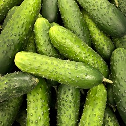 Macro photo food vegetable cucumber. Stock photo green fresh cucumber vegetable