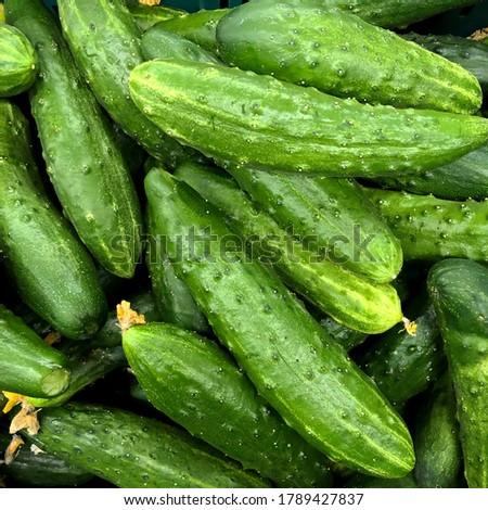 Macro photo food vegetable cucumber. Stock photo green fresh vegetable cucumber
