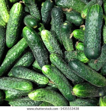 Macro Photo food vegetable cucumber. Texture background food vegetables ripe juicy cucumbers. Image food product vegetable green cucumber
