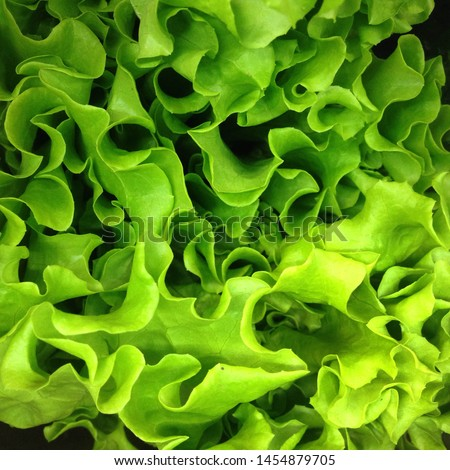 Macro Photo food vegetable green  salad. Texture background fresh mixed  Lettuce green  salad. Product Image Vegetable green salad