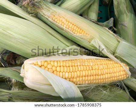 Macro photo fresh corns vegetable. Stock photo fresh corn swing background texture