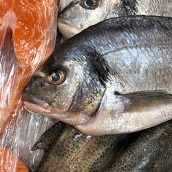 Macro photo fresh Dorada fish. Stock photo Gilt-head bream fish on ice