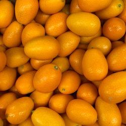 macro photo fruit Kumquat. Stock photo citrus Kumquat tropical fruit
