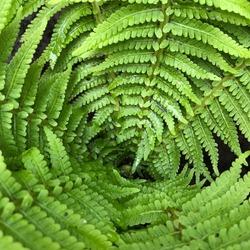 Macro photo green fern plant. Stock photo nature fern plant