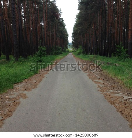 Macro photo nature forest road. Background road passes through a pine forest. Image landscape nature forest road