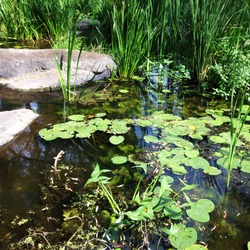Macro photo nature river landscape. River water with stones, reeds and lilies. Photo nature pond lake river landscape