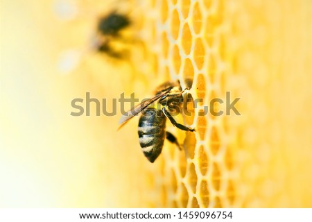 Photo of  Macro photo of a bee hive on a honeycomb with copyspace. Bees produce fresh, healthy, honey. Beekeeping concept