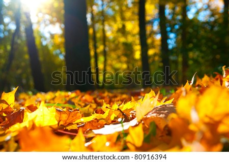 macro photo of a fallen leaves in autumn forest, shallow dof - stock photo