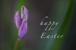 macro photo of a flower as a greeting card with the words Happy Easter