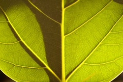 Macro photo of a grean leaf with sun light and shadow game