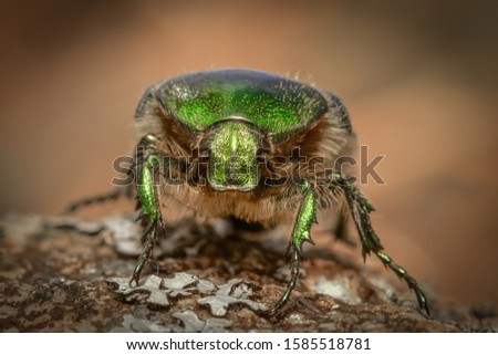 Macro photo of a green forest beetle close-up