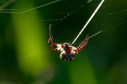 macro photo of a spider spider spinning its cobweb/web