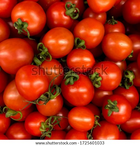 Macro photo of a vegetable red cherry tomato. Fruit vegetables tomato lies in rows. Stock photo  Background small tomatoes cherry