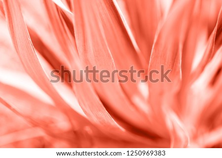 Macro photo of agave leaves colored in color of year 2019 Living Coral. Bright Macro color.