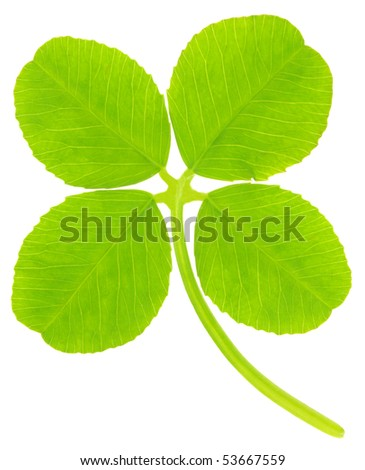Macro photo of clover isolated on white