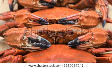 """Macro photo of cooked crabs (""""Necora puber"""" or velvet swimmer) on a tray before chopping them to serve on the plates Stockfoto ©"""