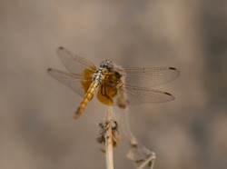 Macro photo of dragon fly insect