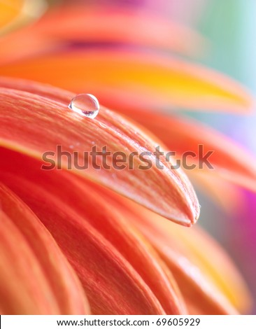 Macro photo of flower with water drop