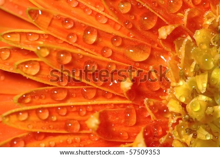 Macro photo of flower with water drops