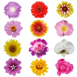 Macro photo of flowers set: rose,  sunflower, orchid, peony, zinnia, cirsium, bristly rose, common mallow  on a white isolated background