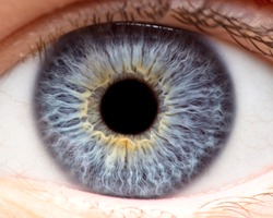Macro photo of human eye, iris, pupil, eye lashes, eye lids.
