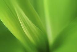 Macro photo of leaf green and fresh