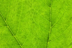 Macro Photo Of Natural Green Leaf Pattern