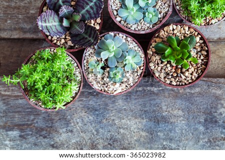 Macro photo of succulents. Desert plants in small plants. Succulents and cactus in different concrete pots. Home decoration.