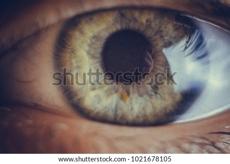 macro photo of the eye. blood vessels on the eyes. eyelashes in macro. pupil close-up. - Shutterstock ID 1021678105