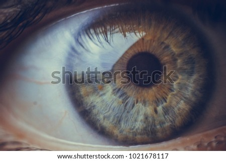 macro photo of the eye. blood vessels on the eyes. eyelashes in macro. pupil close-up. - Shutterstock ID 1021678117