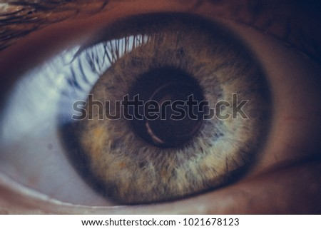 macro photo of the eye. blood vessels on the eyes. eyelashes in macro. pupil close-up. - Shutterstock ID 1021678123