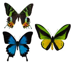 macro photo of three butterflies isolated on white background