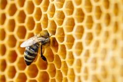 Macro photo of working bees on honeycombs. Beekeeping and honey production image.
