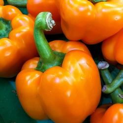 Macro photo orange bell pepper. Stock illustration vegetable orange bell peppers background