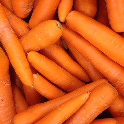Macro Photo spring food vegetable carrot. Texture background of fresh large orange carrots. Product Image Vegetable Root Carrot
