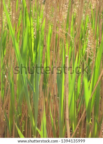macro photo with decorative background of bright fresh green grass and light beige old grass as a source for prints, posters, decor, interiors, Wallpapers, advertising