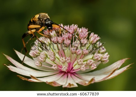 ... flower. Very beautiful insect and flower. Blurred background. - stock