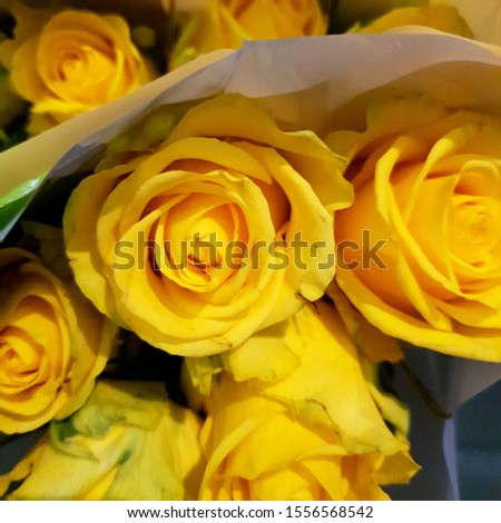 Macro photo yellow rose flower. Stock photo yellow roses bouquet