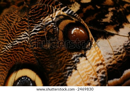 Macro photograph of a butterfly wing
